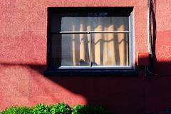 Cat Nap (eddi_monsoon) Tags: 52weeks 52 cat window sun wall