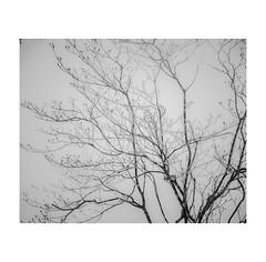 #0181 (Masami H.) Tags: 6x7 film analog mediumformat mamiya7ii kodak portra stilllife snow