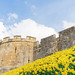 City walls with daffodils.