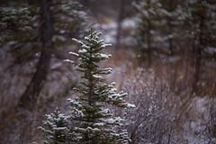 White Noise (Christina Angquico) Tags: canada canmore alberta snow trees nikon 70200mm tamron christinaangquico