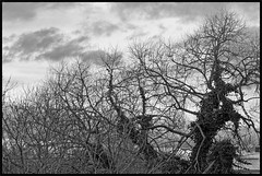 2019/001: A Stark Winter Sky (Rex Block) Tags: nikon d750 dslr 85mm f18g skies trees stark winter project365 daily monochrome bw 365the2019edition 3652019 day1365 01jan19