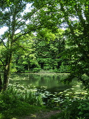 Nothing but green (Justgetdancey) Tags: colwick nottingham england green greenery tree lake lillypad forest country park countrypark landscape nature