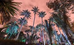 Nocturna jardín Botánico (Luis FrancoR) Tags: nocturnajardínbotánico noche nocturna night luisfrancor ngw ngs ngd ngg ng ngc ngo jardinbotanicobogota