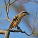 Bird in Xixi Wetlands, Hangzhou, China
