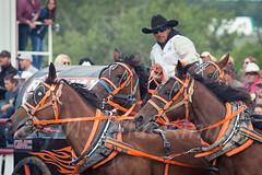 Ponoka Stampede 2016 (tallhuskymike) Tags: ponokastampede event ponoka alberta racing wpca horse cowboy horses chuckwagon chucks race 2016 action outdoors wagon