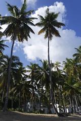 Las dos (ben.bourdon) Tags: palmeras vegetación naturaleza natural cautivadora playa samaná las terrenas república dominicana vacaciones verde