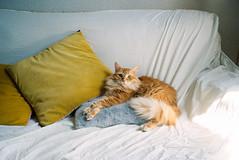 (Bárbara Lanzat) Tags: 35mm film analog mjuii kodak200 colorplus200 olympusmjuii mju2 diary filmisnotdead ishootfilm bárbaralanzat cats mogwai