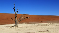 Deadvlei (6) (Richard Collier - Wildlife and Travel Photography) Tags: namibia desert deadvlei landscape sand southernafrica
