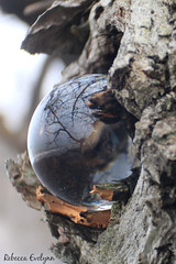 IMG_4355.JPG copy cropit (Rebecca Evelynn) Tags: sky lakeontario benches chickadee barredowls naturephotography presquileprovincialpark waves crazyclouds ice ducks woodpeckers floating islands bigrock moss greenmoss