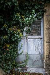 Route de Nistos, Seich (Ivan van Nek) Tags: france occitanie midipyrénées frankrijk frankreich nikon nikond7200 d7200 doorsandwindows ramenendeuren hautespyrénées 65 overgrown decaying klimop hederahelix derailinator abandoned decayed mysteriousplacewithnoname