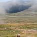 Sheep // Lesotho