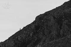 Come ombre sui crinali (Vassili Balocco) Tags: cervo deer cervuselaphus montagna mountain natura nature wildlife outdoor parconazionale nationalpark abruzzo lazio molise