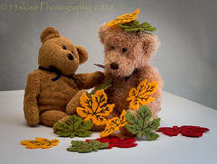 Playing in the Leaves (HTBT) (13skies) Tags: leaves autumn season fun play playing teddy teddybears huntley barry brownbear teddybeartuesday fooling indoors kidding mess pretend sticking fuzzy love happyteddybeartuesday mapleleaf fall