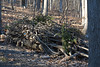 Brush Pile (Salford Twp.) (stinkenroboter) Tags: brushpile salfordtownship birdfeeder sticks woods