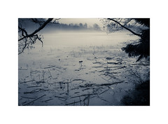 DM XXI ([ Time - Beacon ]) Tags: tb lake water frozen landscape mood bw bnw monochrome monochromatic trunk branches twigs blackandwhite blackwhite fog mist trunks trees ice