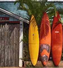 Surfer's Hostel, Maui (Edmonton Ken) Tags: alohasurfhostelcom surfboard sailboard hostel surf surfer aloha maui hawaii paia palm colorful yellow orange red bamboo blue door house baldwin avenue 221 photoshop filter tree bright fence tourism travel vacation visit
