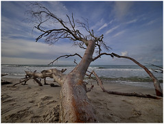 fallen giant (kurtwolf303) Tags: balticsea ostsee tree sky clouds baum himmel wolken sand coast küste kurtwolf303 omd mft microfourthirds olympusem1 sea meer beach strand water wasser wood holz natur nature