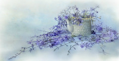 from down the road (Ani Carrington) Tags: stilllife flowers purple kettle textured texture blue soft pastel delicate minimalism minimal