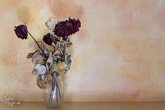 Long Gone I (judithrouge) Tags: flowers decay old roses yellow blumen rosen vertrocknet alt orange gelb rot red stilllife stillleben