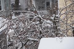A February Winter Fun Time (kuntheaprum) Tags: stormpetra snow backyard sony a7riii tamron 70300mm sledding