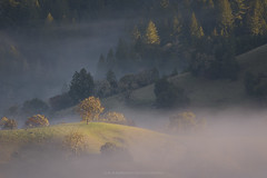 Fragile Concinnity (Bob Bowman Photography) Tags: fog mist trees hills forest landscape light california sonomacounty green