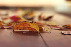 Vintage yellow (amuna_caty) Tags: leaves light leave lights life nice nature natures autumn autum photo photography photograph photographer picture canon color colors clear cold table beautiful