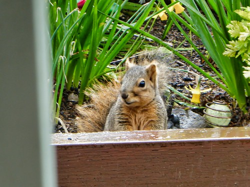 2019-03-06 - Nature Photography - Squirrel - Having Lunch