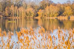 Je te prête mes jumelles… (Un instant.) Tags: lake trees 85mm canon birds