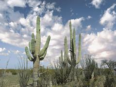 Casa Grande  National  Monument, AZ 4 (Largeguy1) Tags: landscape clouds blue sky canon 5d mark ii cactus
