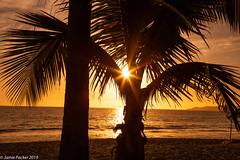 Puerto Vallarta.jpg (jamiepacker99) Tags: mexico waves canonef24105mmf14lusmlens beach landscape sunset canon6d sky seascape feburary 2019 puertovallarta sea palmtree trees goldenhour