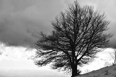 L'arbre  -   Tree (Philippe Haumesser (+ 8000 000 view)) Tags: arbre tree nuages clouds ciel sky noiretblanc blackandwhite monochrome vosges nikond7000 nikon d7000 reflex 2019