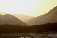 IMG_5306 (monika.carrie) Tags: monikacarrie wildlife scotland aberdeenshire royaldeeside