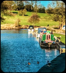 Leeds & Liverpool canal (David JP64) Tags: man dog boats barge ducks leedsliverpool canal