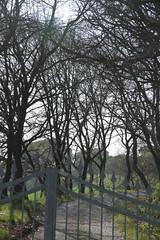 il cancello chiuso - Pianello di Ostra (walterino1962 / sempre nomadi) Tags: cancello stradasterrata case chiesa campanile alberi arbusti erba luci ombre riflessi pianellodiostra ancona