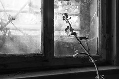 the return of nature (patrickhollenstein) Tags: old abandoned lost lostplace nature urban light verlassen licht blackandwhite