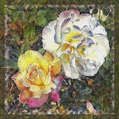 Rose is a Rose (boeckli) Tags: 006351 rx100m6 roses rosen textures texturen texture textur ddg deepdreamgenerator photoborder outdoor blumen blume blüten blossom bloom blossoms blooms bunt farbig farbenfroh rahmen frame smileonsaturday garten plants plant pflanzen pflanze roseisarose flower flowers