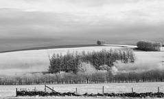 Not snowing .... but .... (Elisafox22) Tags: elisafox22 nikon d90 infrared 720nm ir gate steps fencedfriday wood trees fencefriday hff wooden fyviecastleloch fence mono sepia landscape fyvie aberdeenshire outdoors scotland blackandwhite monotone shadows bw greyscale elisaliddell©2019