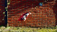 flying bag (erix!) Tags: wall bag wind backstein mauer bachsteinmauer ziegelmauer bricks