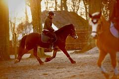 Heidi And Parc Alfe (vesterskov) Tags: daniel vesterskov foto photo fotografi photography sony a99 a99v slta99 slta99v full frame fullframe sigma 70200mm f28 28 ii ex dg apo macro hsm 70200 mm team pony power horses horse hest hesteliv heste dansk danish ponies riding ride welsh mountain cob sec section heidi parc alfe d