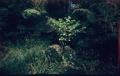 The plant is a little bit blurry (Matthew Paul Argall) Tags: kodakbabybrownie fixedfocus 127 127film rerachrome100 100isofilm slidefilm meniscuslens