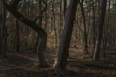 Forest (Helmut Wendeler aus Hanau) Tags: forest tree dark winter hahnenkamm