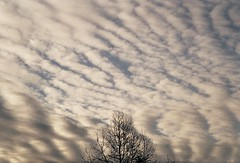(mari-ann curtis) Tags: 35mm colour light sky clouds sunshine lines tree branches blue nostalgia travel film