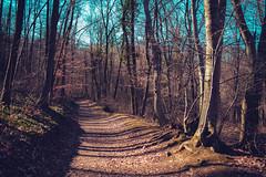 KRIS8119 (Chris.Heart) Tags: erdő buda budapest túra természet forest nature hiking