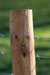 Shocked Fence Post! (RiverCrouchWalker) Tags: shockedfencepost fence fencefriday happyfencefriday fencepost fenceface barbedwire woodgrain hanningfieldreservoir essex downham