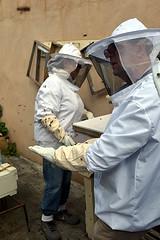 DSC_9744-61 (jjldickinson) Tags: nikond3300 107d3300 nikon1855mmf3556gvriiafsdxnikkor promaster52mmdigitalhdprotectionfilter longbeach bixbyknolls longbeachbeekeepers outreach class beeprepared insect bee honeybee apismellifera hive hiveinspection