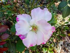 flor jardin del parque Campo del Moro Madrid 02 (Rafael Gomez - http://micamara.es) Tags: campodelmoro esp españa madrid flor jardin del parque campo moro