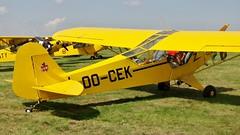 OO-CEK - Piper L-4J Cub       Schaffen Diest (V77 RFC) Tags: august2010