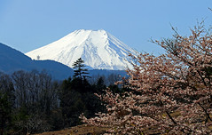 Spring in Japan : 2019 cherry blossoms and Mt.Fuji (gudonjin) Tags: mtfuji japan mountain snow spring cherry blossom