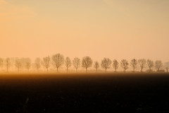 19040286 (felipe bosolito) Tags: tree row dawn sunrise orrange minimalism landscape fog morning spring fuji xpro2 xf1655f28