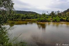 180802-16 La jungle (2018 Trip) (clamato39) Tags: jungle forest arbre trees kohrong cambodge cambodia island île olympus eau water river rivière voyage trip asia asie